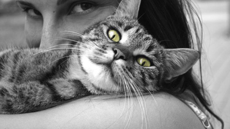 Cat Eyes per un volto da star
